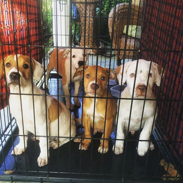 Help Us Get These Pups Adopted!
